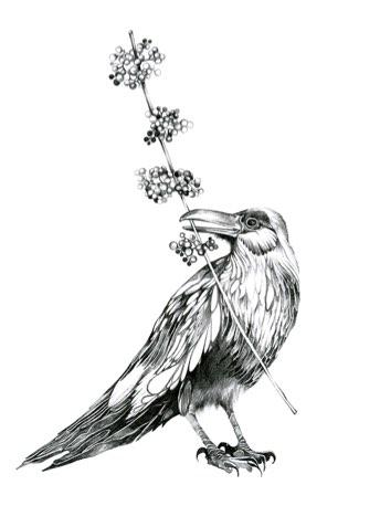 radical-wonders-raven