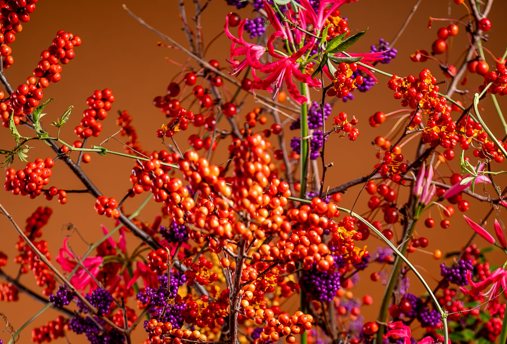 Berries beyond Christmas